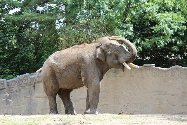 【動画】サンドウィッチマンが歌う0655「上野動物園準備中」に癒される人続出!